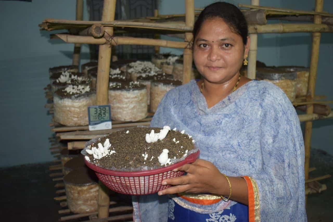 Mushroom Founder sri lakshmi